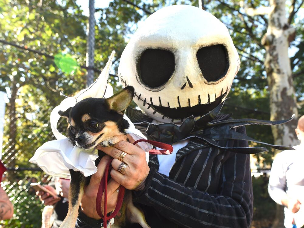 Pies w kostiumie na psiej paradzie Halloween