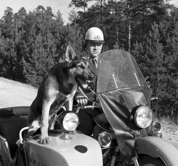 Oficer straży leśnej z psem na patrolu. 1983 rok. - Sputnik Polska