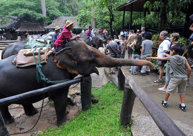 Turyści bawią się z słoniami, Tajlandia. Zdjęcie archiwalne