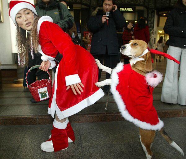 Dziewczyna z psem w kostiumach Świętego Mikołaja, Seul - Sputnik Polska