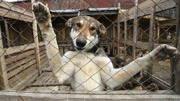 Pies w schronisku - Sputnik Polska