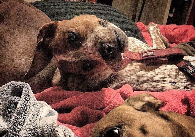 """""""Biedny pies"""". Internauci komentują nową iluzję optyczną"""