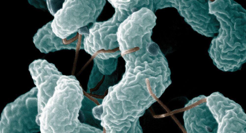 Bakteria kampylobakteriozy