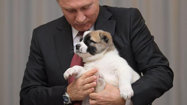Putin z psem - Sputnik Polska