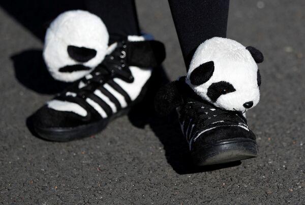 19 grudnia pandę mogli zobaczyć już wszyscy chętni. - Sputnik Polska
