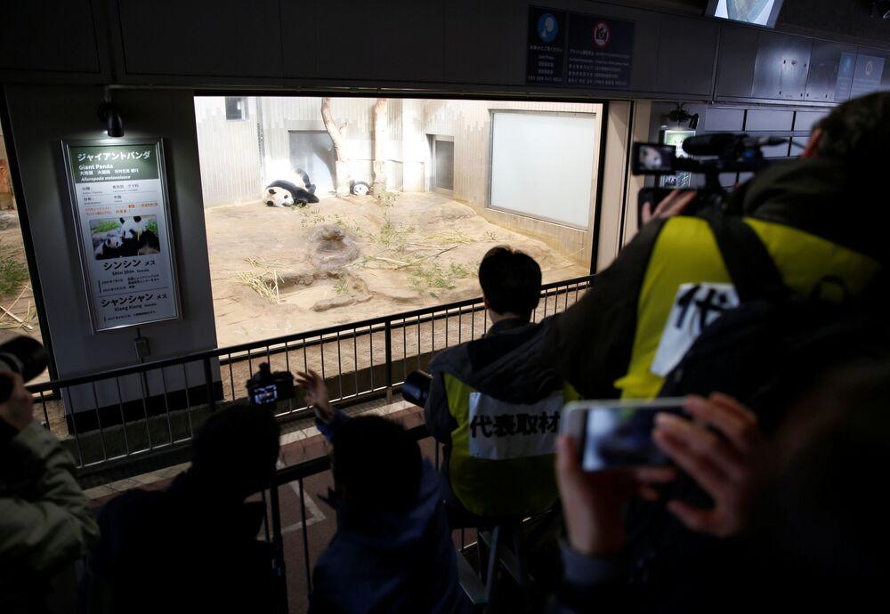 Pokaz medialny pandy, na którym byli obecni japońscy uczniowie i dziennikarze.