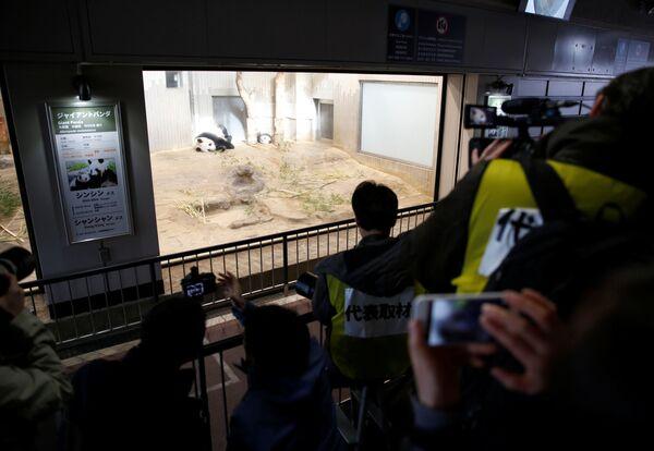 Pokaz medialny pandy, na którym byli obecni japońscy uczniowie i dziennikarze. - Sputnik Polska