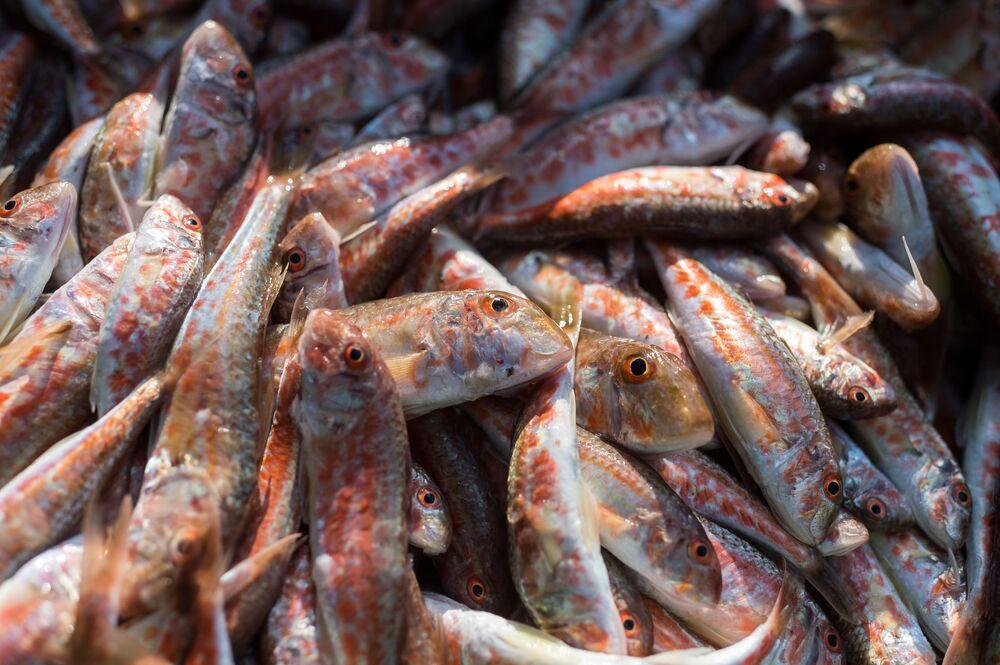 Ryba złowiona podczas przybrzeżnego połowu ryb w Sewastopolu.