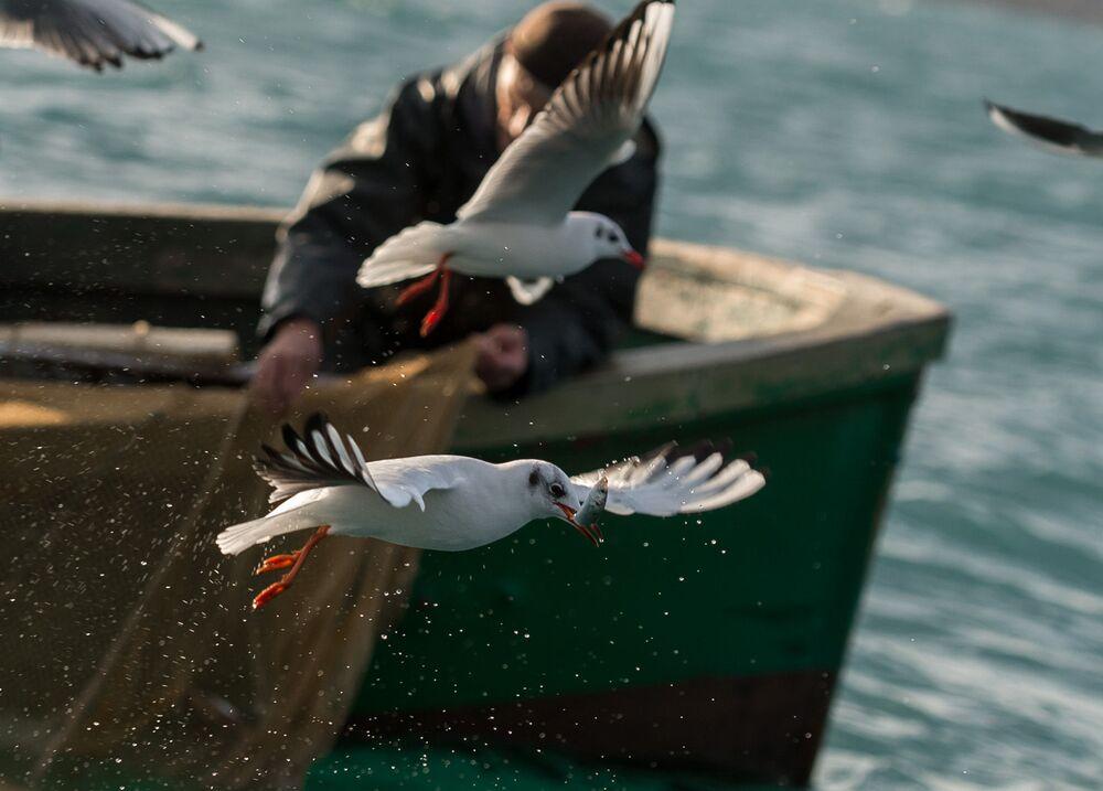 Rybak podczas przybrzeżnego połowu ryb w Sewastopolu.