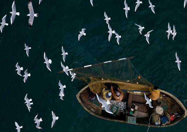Rybacy podczas przybrzeżnego połowu ryb w Sewastopolu.