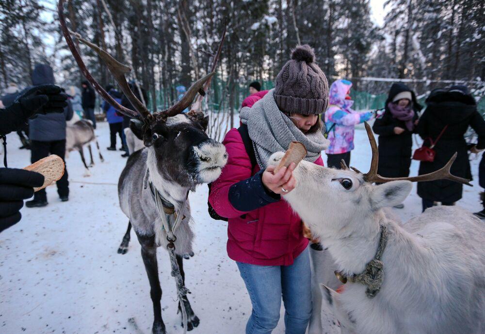 Po obiedzie na gości czekają stare i współczesne rozrywki: saamski futbol, przejażdżka na skuterach śnieżnych i zaprzęgach jeleni.