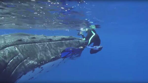Горбатый кит защитил женщину от акулы - Sputnik Polska