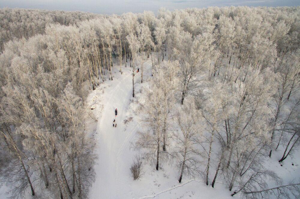 Wyścig psich zaprzęgów Bożonarodzeniowy zajazd 2018 został zorganizowany na bazie kompleksu biathlonowego w Nowosybirsku.