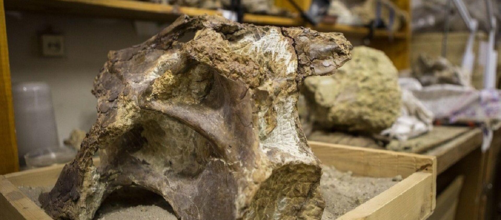 Skamieniałości dinozaura Sibirotitan astrosacralis - Sputnik Polska, 1920, 15.01.2018