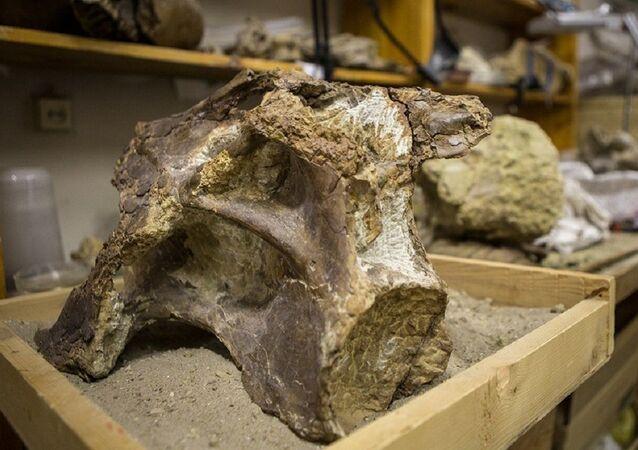 Skamieniałości dinozaura Sibirotitan astrosacralis