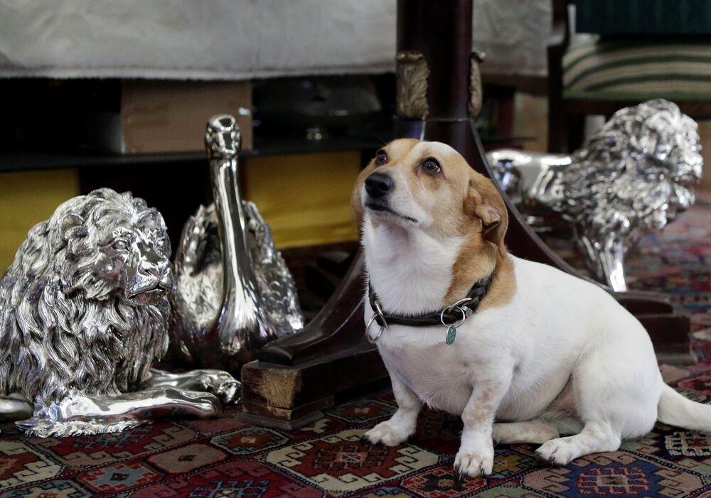 Pies śpi koło srebrnych figurek zwierząt w sklepie Silber Sturm w Wiedniu, Austria.