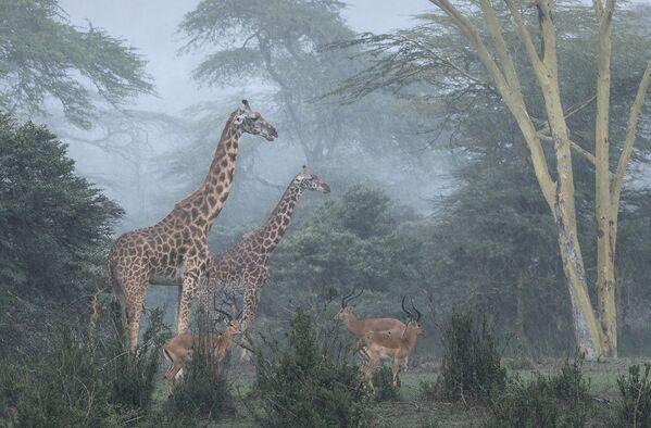 Zwycięzcą konkursu w kategorii Rozumienie dzikiej przyrody została praca Narodowy Park Nairobi fotografa z Portugalii Jose Fragozo. - Sputnik Polska