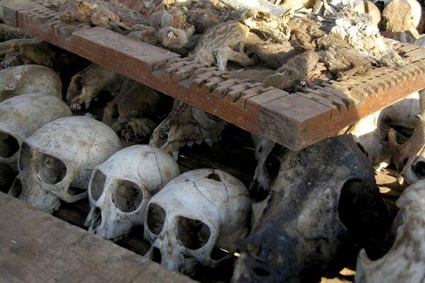 Czaszki zwierząt na targowisku Akodessawa w Lomé, stolicy Republiki Togijskiej. - Sputnik Polska