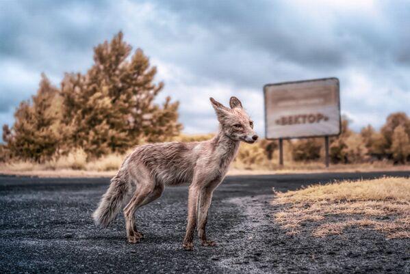 Przez 30 lat w zamkniętej strefie rozmnożyło się wiele dzikich zwierząt. - Sputnik Polska