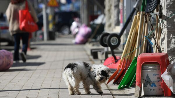 Pies na jednej z ulic w mieście Pjongczang w Republice Korei - Sputnik Polska