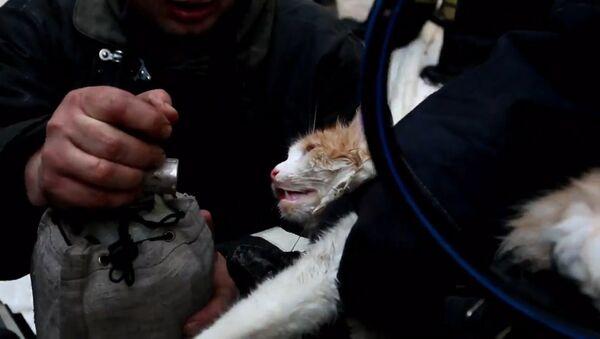 Akcja ratunkowa kota - Sputnik Polska