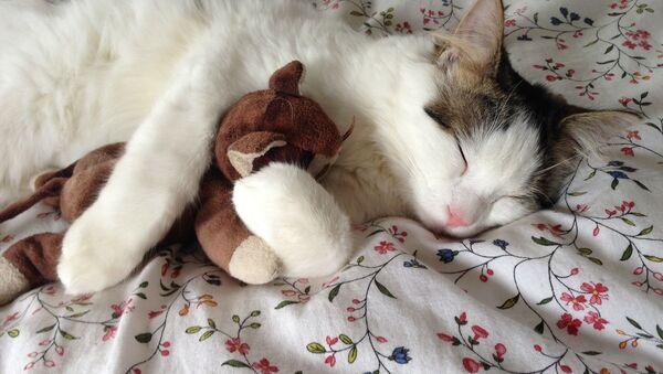 Śpiący kotek z maskotką - Sputnik Polska