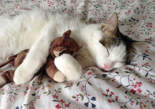 Śpiący kotek z maskotką