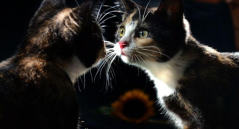 Kiedy kot widzi swoje odbicie w lustrze...