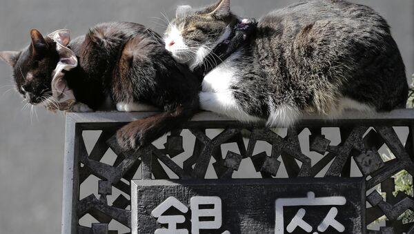 Śpiące koty na ulicach Tokio - Sputnik Polska