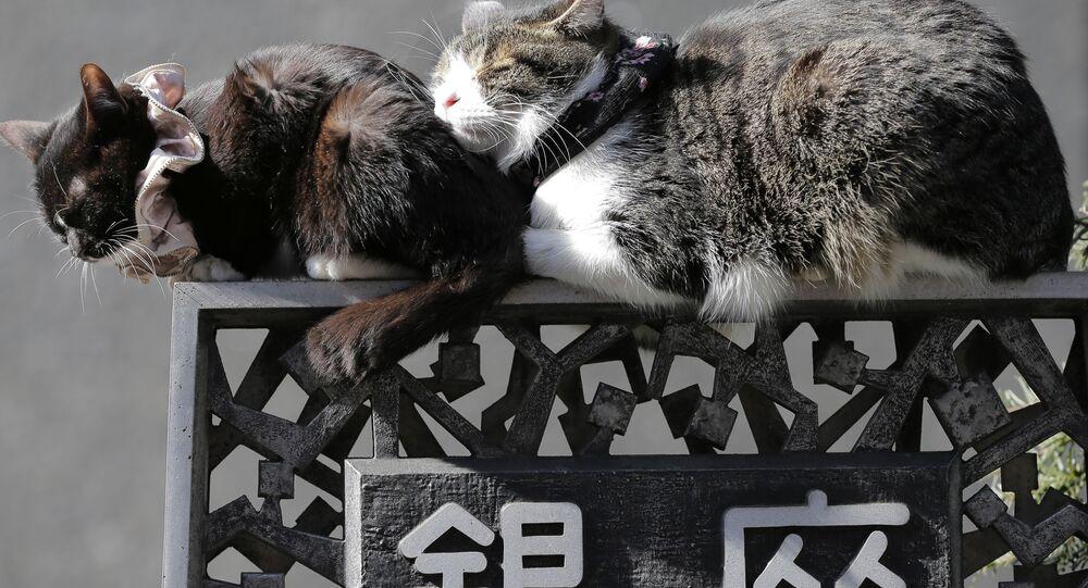 Śpiące koty na ulicach Tokio