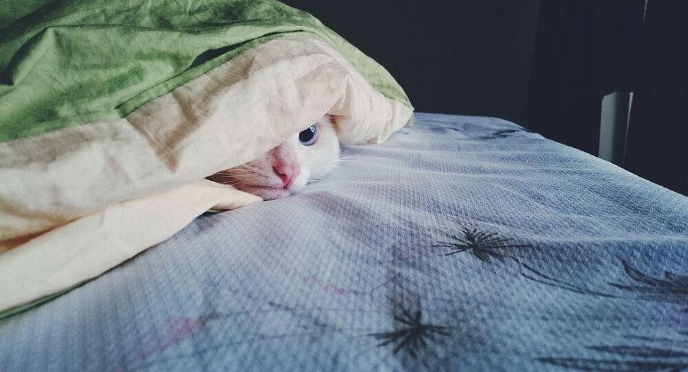 Kot pod kołdrą