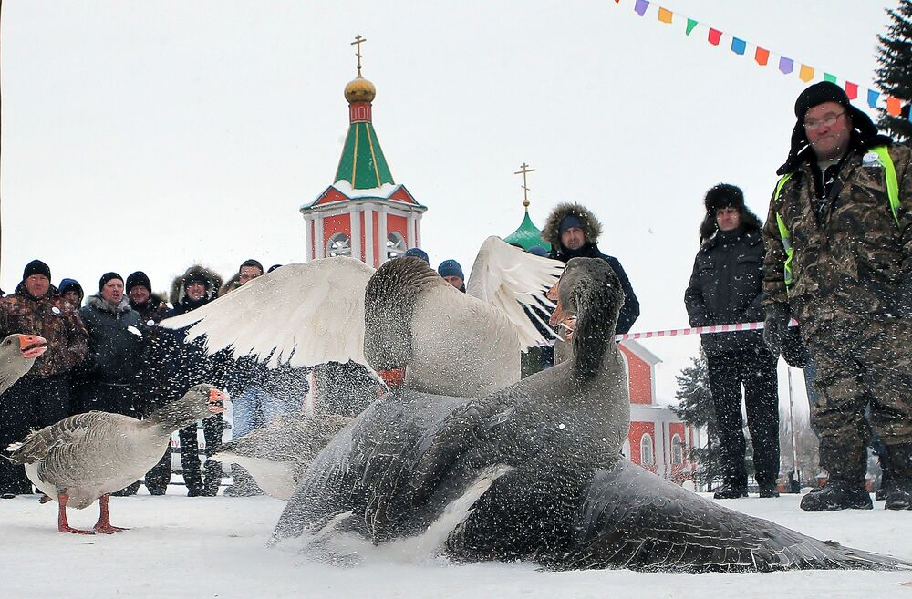 7. turniej Walki gęsi w obwodzie tulskim