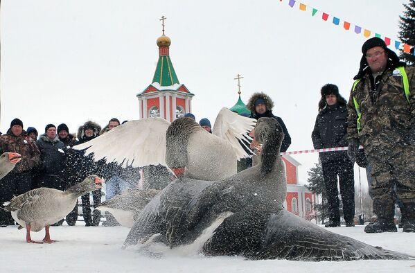 7. turniej Walki gęsi w obwodzie tulskim - Sputnik Polska