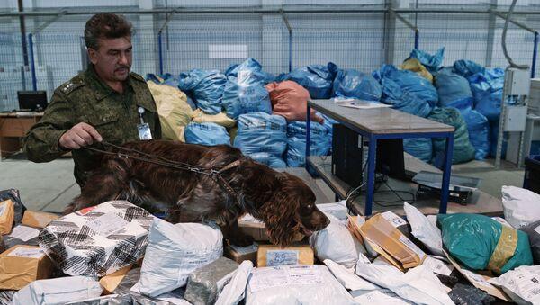 Pracownik rosyjskiej służby celnej z psem sprawdza przesyłki na obecność narkotyków - Sputnik Polska