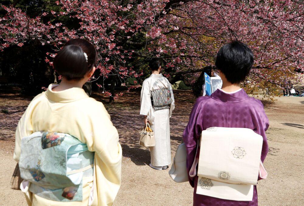 W Japonii zakwitły wiśnie