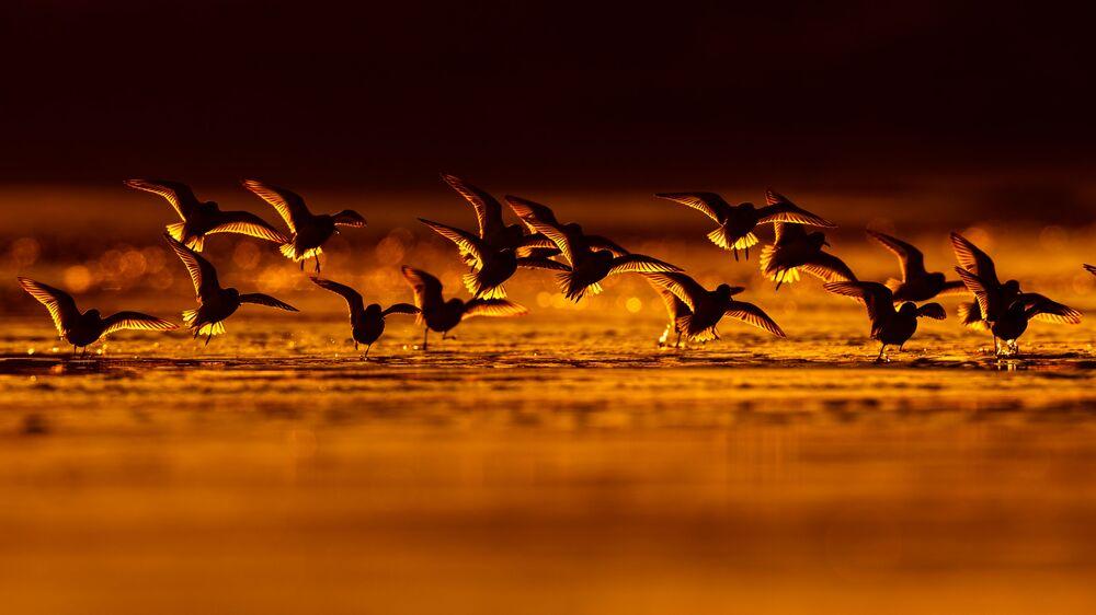 Finalista konkursu Bird Photographer of the Year 2018 - Mario Suarez Porras