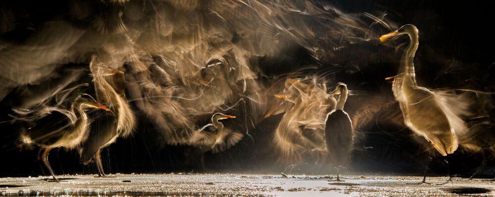 Finalista konkursu Bird Photographer of the Year 2018 - Bence Mate