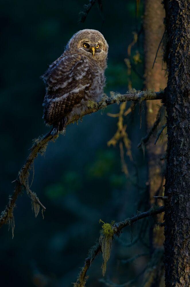 Finalista konkursu Bird Photographer of the Year 2018 - John Launstein