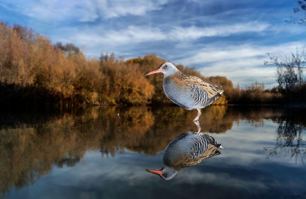 Finalista konkursu Bird Photographer of the Year 2018 - Mario Cea