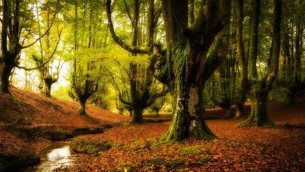 Las w Kraju Basków, Hiszpania - Sputnik Polska