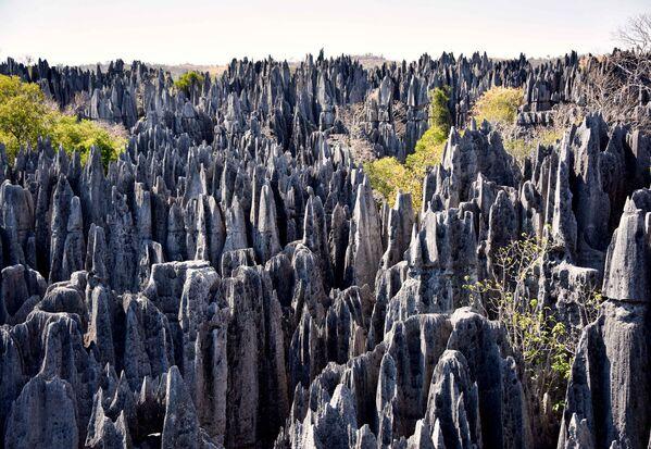 Las w Madagaskarze - Sputnik Polska
