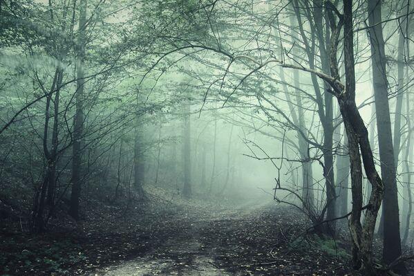 Las w Transylwanii - Sputnik Polska