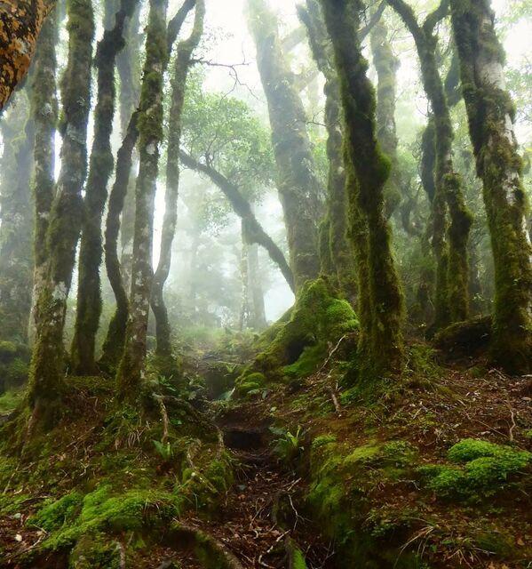 Las w Nowej Zelandii - Sputnik Polska