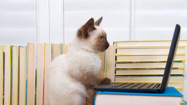 Kot przy komputerze - Sputnik Polska