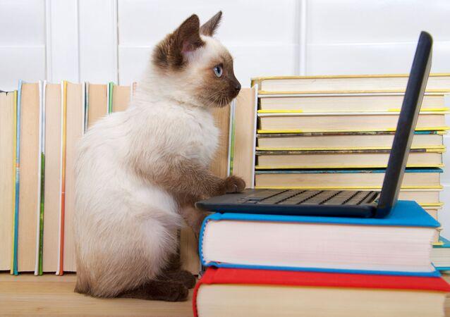 Kot przy komputerze