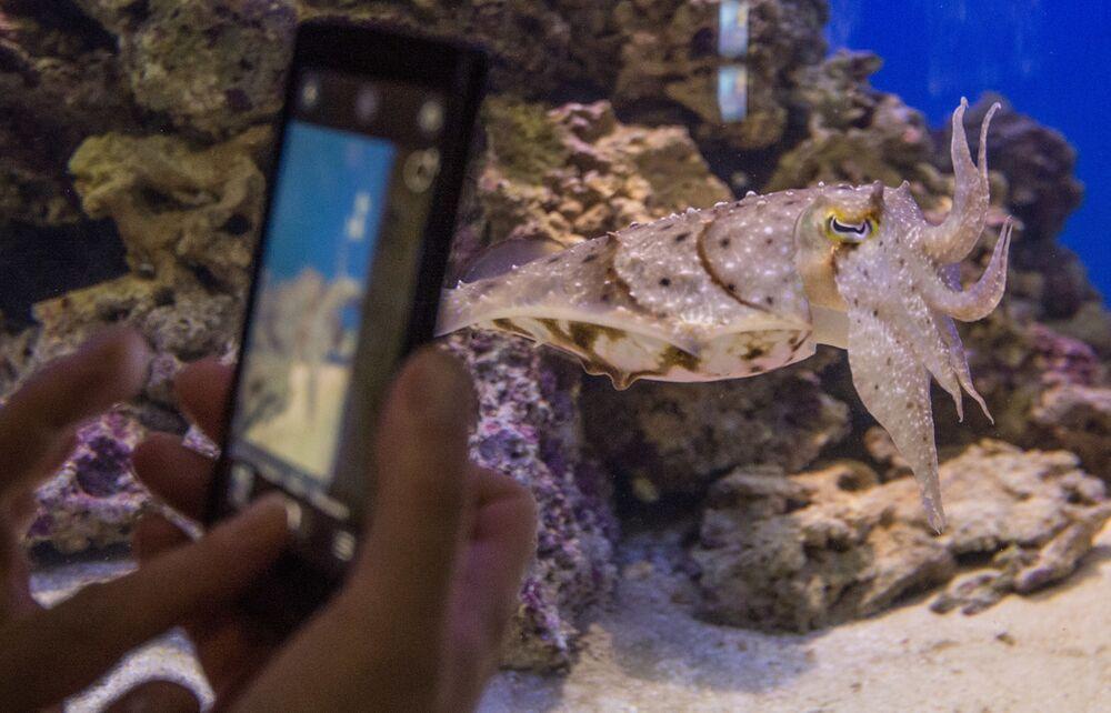 Mieszkańcy centrum oceanografii i biologii morskiej Moskwarium na WDNCh w Moskwie