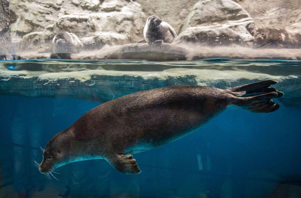 Kotki morskie w największym w Europie centrum oceanografii i biologii morskiej Moskwarium na WDNCh