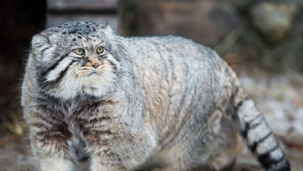 Manuel w moskiewskim ogrodzie zoologicznym - Sputnik Polska