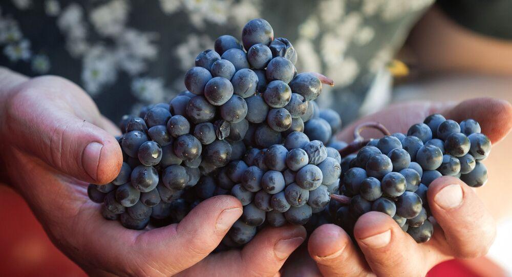 UPPA Winery, Krym