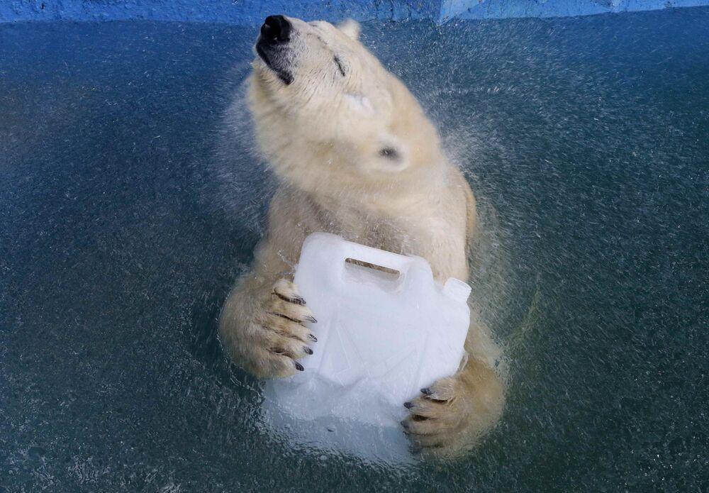 """Biała niedźwiedzica Aurora w basenie zoo """"Rojew Ruczej"""" w Krasnojarsku"""